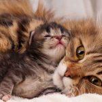 هل تحزن القطط لفراق اطفالها
