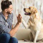 هل تشعر الكلاب بصاحبها 5 أشياء يستشعرها كلبك مبكرا !