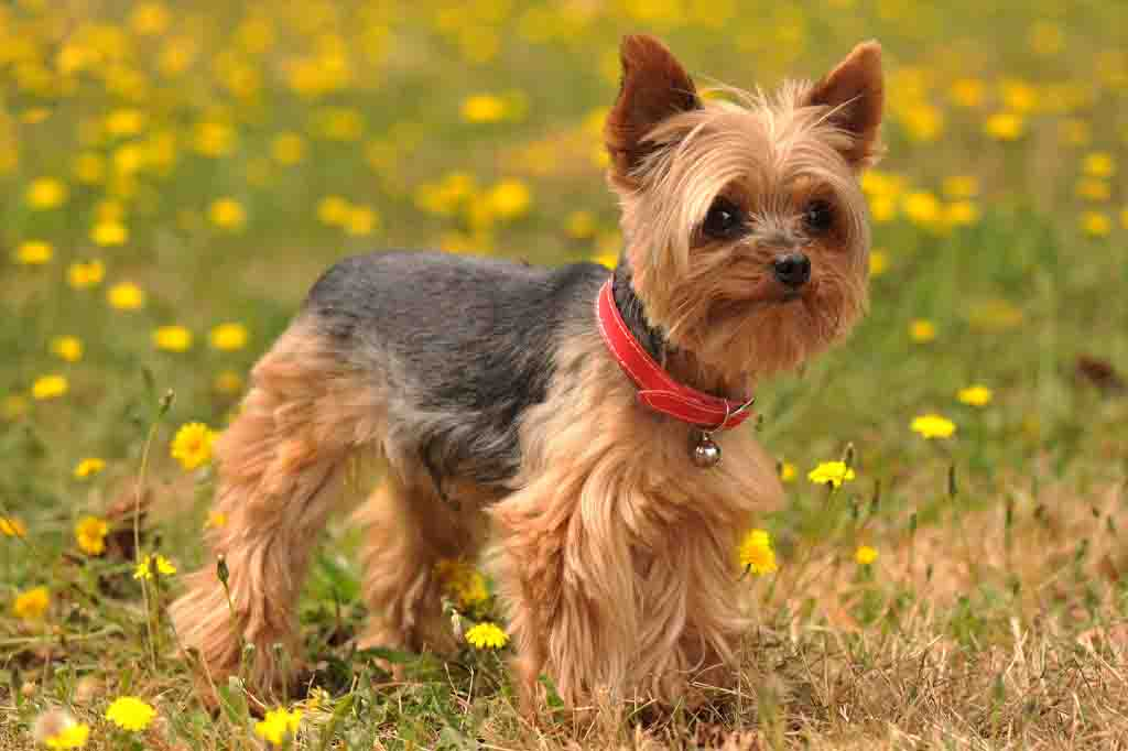 يعشق هذا الكلب اللعب في المساحات الخضراء