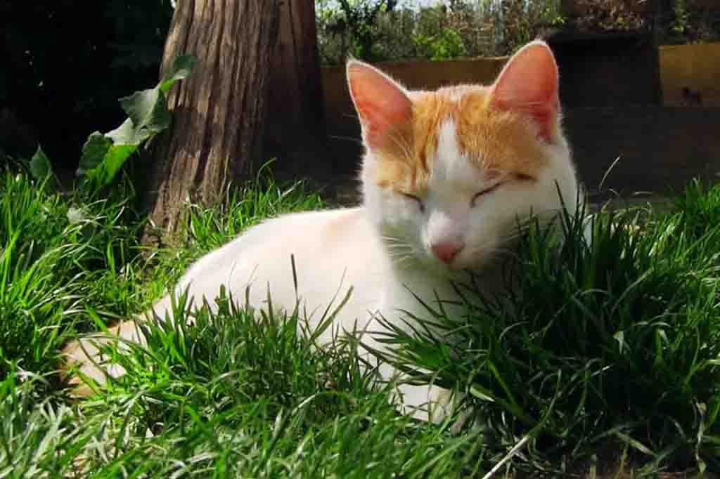 يمكنك ان تأخذ بعض من العاب قطتك التي يحبها حيث ان فيها رائحته