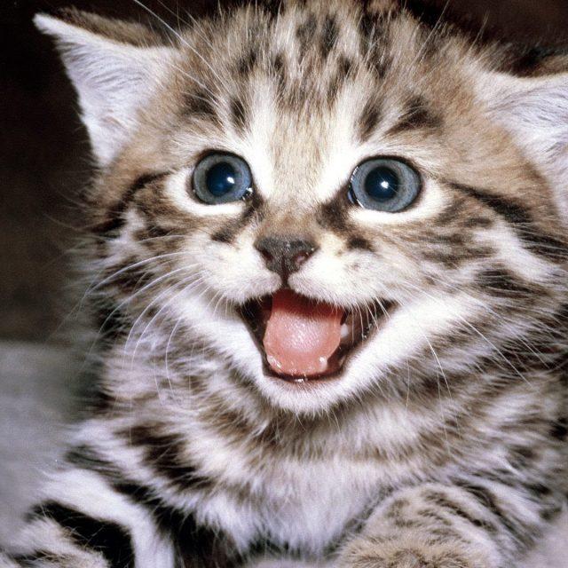 أسباب بحة الصوت في القطط وطرق العلاج