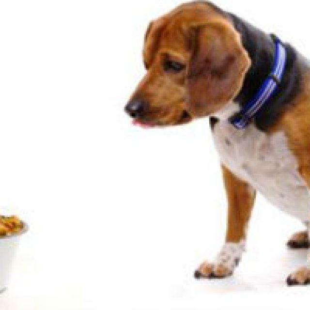 الإسهال في الكلاب