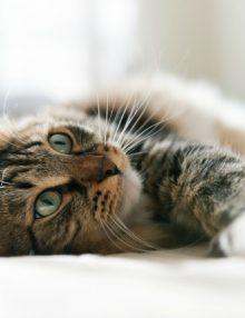 معلومات عن الانسداد المعوي في القطط