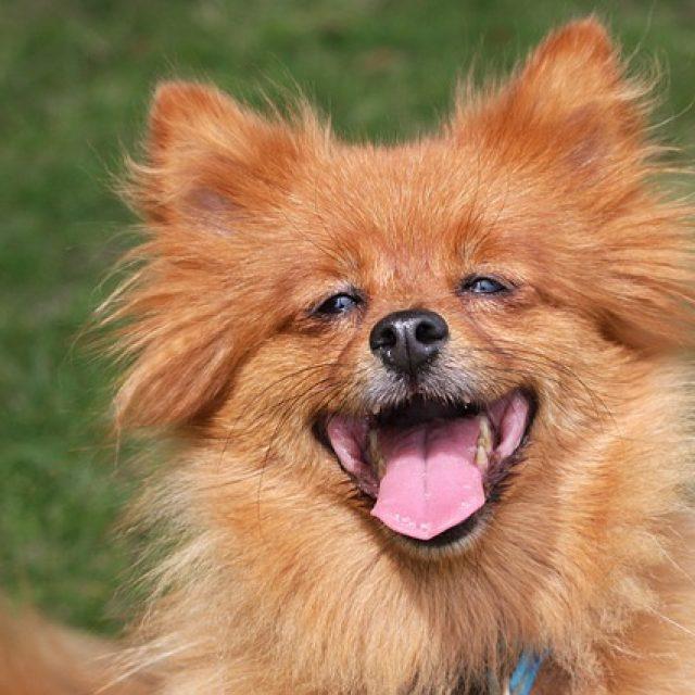 كيف أعرف أن كلبي مريض – العلامات الصحية في الكلاب