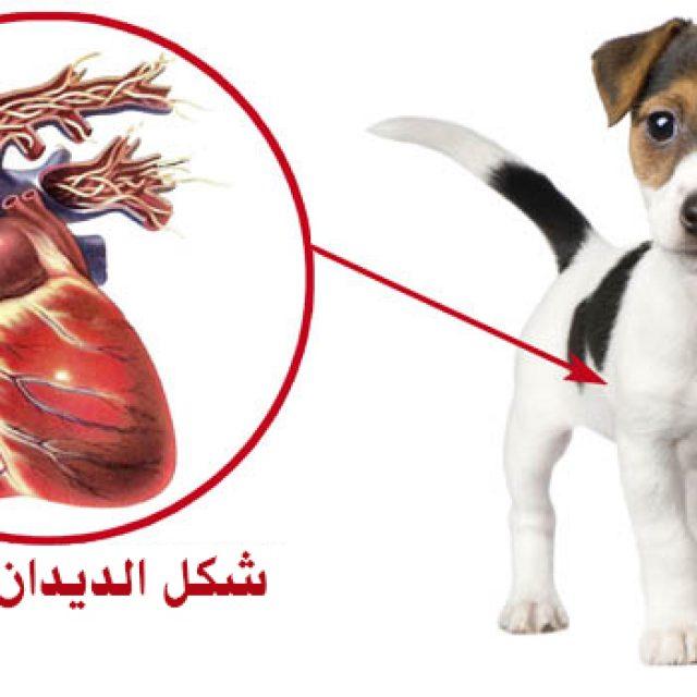 ديدان القلب في الكلاب .. الأعراض و العلاج