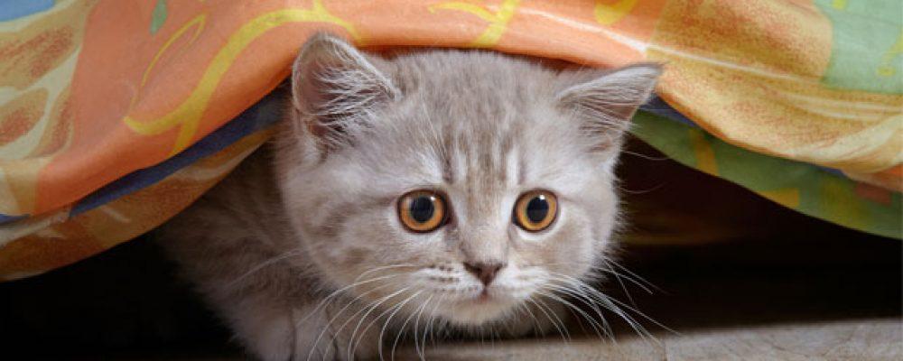 القطط هي أقوى الدفاعات الطاقية لمنزلك وأفراد أسرتك