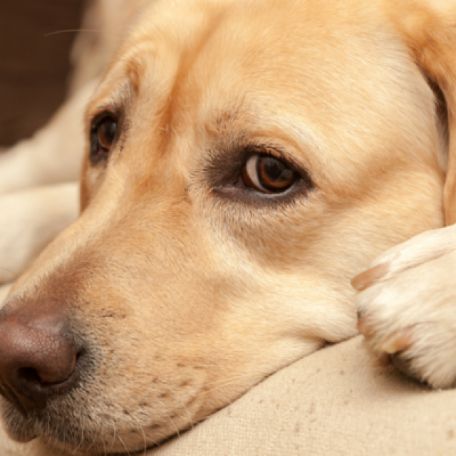 8 علامات تدل على الخوف عند الكلاب