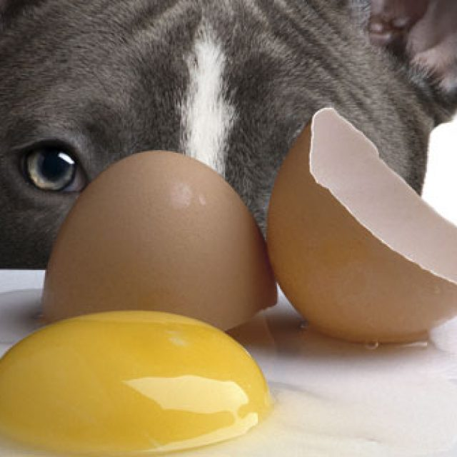ماهي فوائد قشر البيض للكلاب