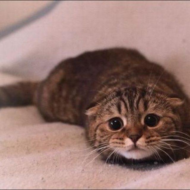 5 علامات على مرض الكلى في القطط