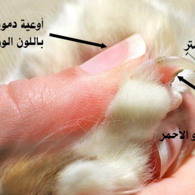 قص و تقليم أظافر القطط بالطريقة الصحيحة