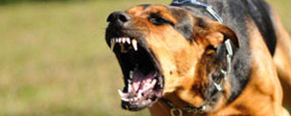 نزع العدوانية والشراسة من الكلاب