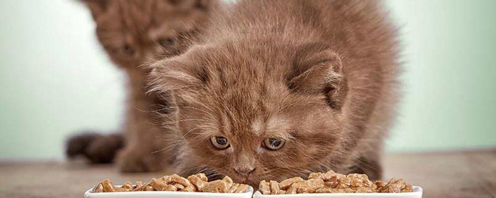 جدول طعام القطط الصغيرة من سن شهرين