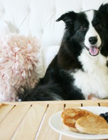 وصفات طعام الكلاب : 5 وصفات شهية في طعام الكلاب المنزلية