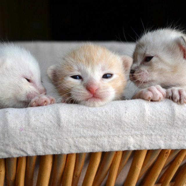 9 معلومات هامة عن القطط الصغيرة بعد الولادة