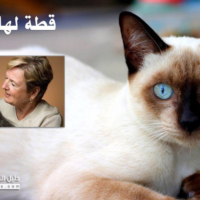 5 معلومات عن اذن القطط