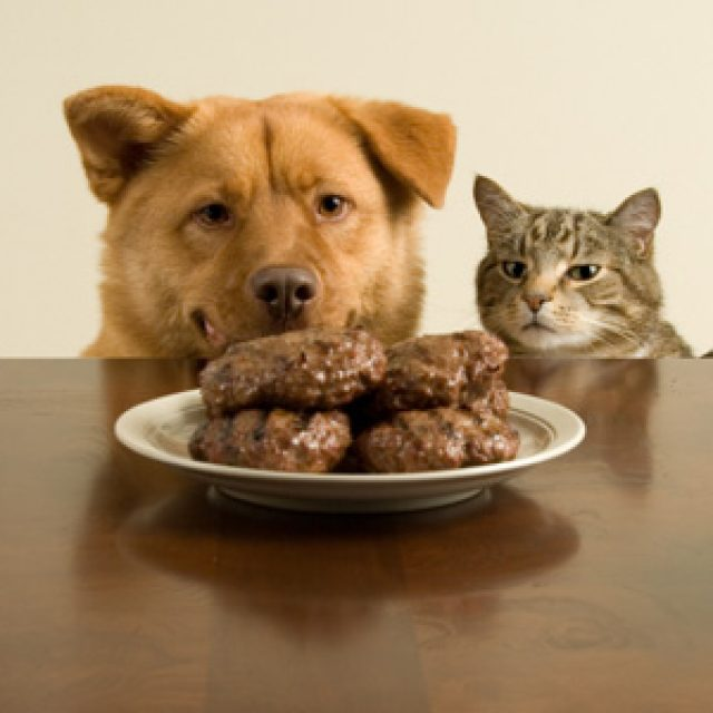 التغذية السليمة للحيوانات الأليفة