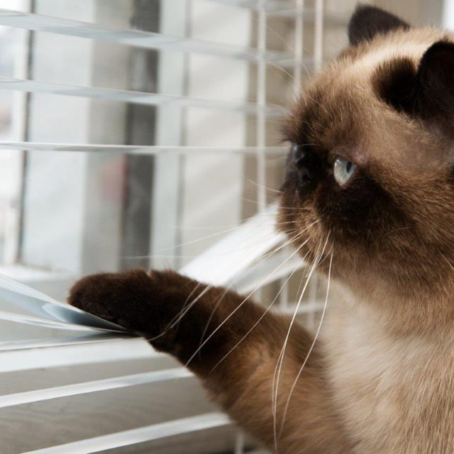 4 طرق للترفيه عن قطتك وأنت بعيد عن المنزل
