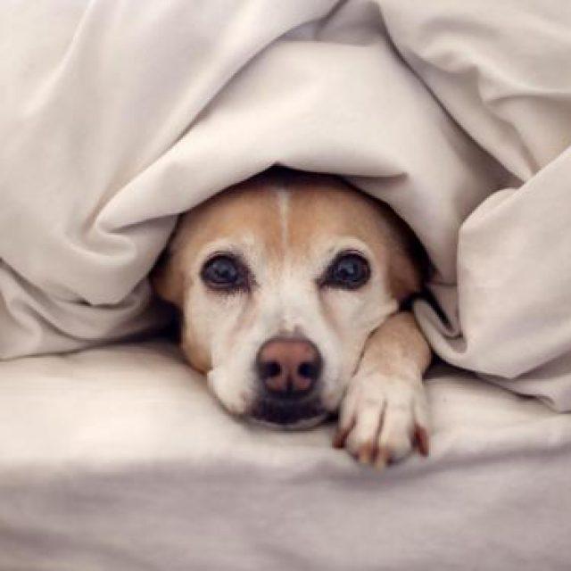 أسباب تأخر الحيض عند الكلاب بالتفصيل