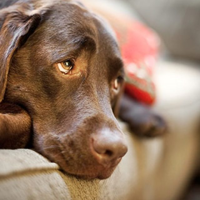 علاج تسمم الكلاب وأعراض التسمم للكلاب بالتفصيل