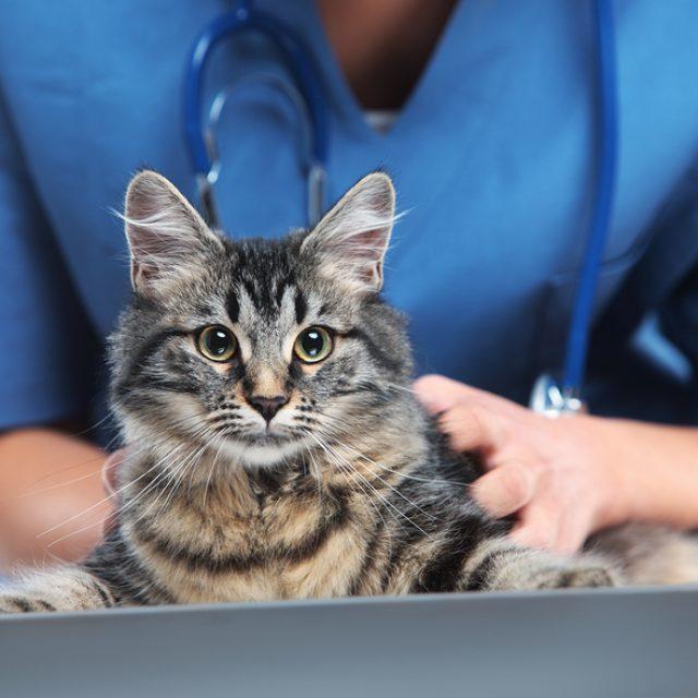 كيف تكتشف سرطان الفم في قطتك ؟ علامات الإصابة وأعراضها بالتفصيل