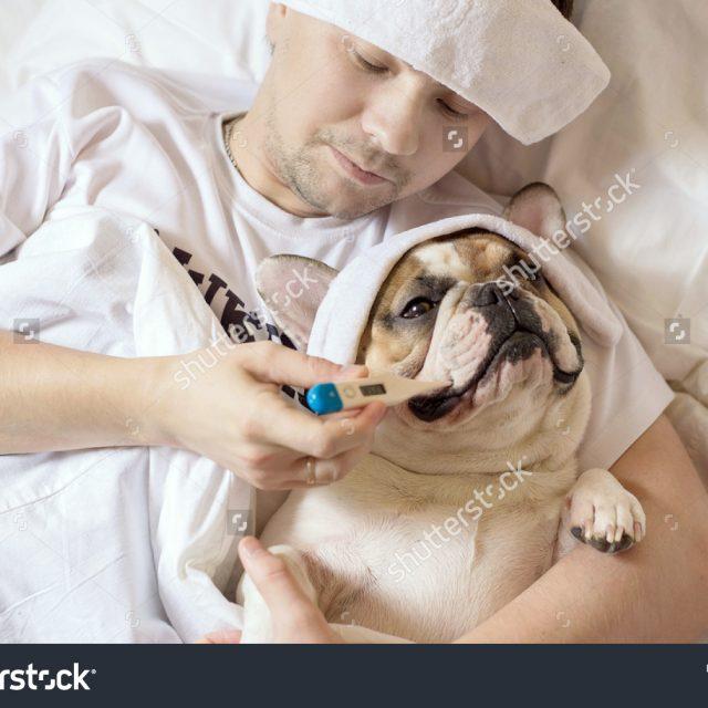 أشهر 5 أمراض تنتقل من الإنسان إلى الكلاب