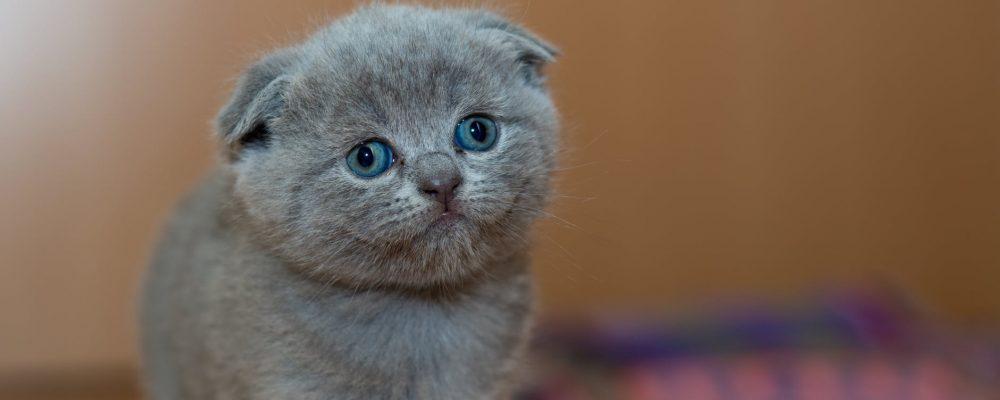 10 تصرفات تفعلها القطط تدل على اصابتها بالامراض