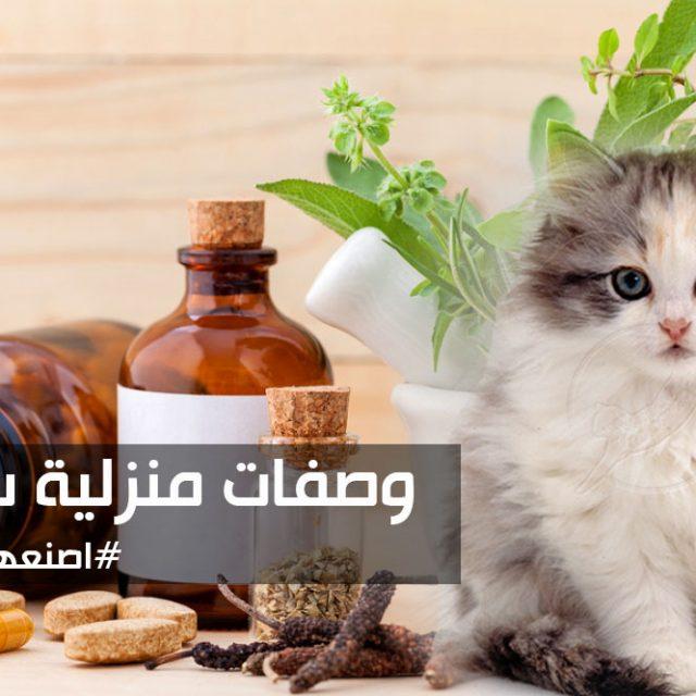 3 وصفات منزلية في العناية بشعر القطط ومنعه من التساقط