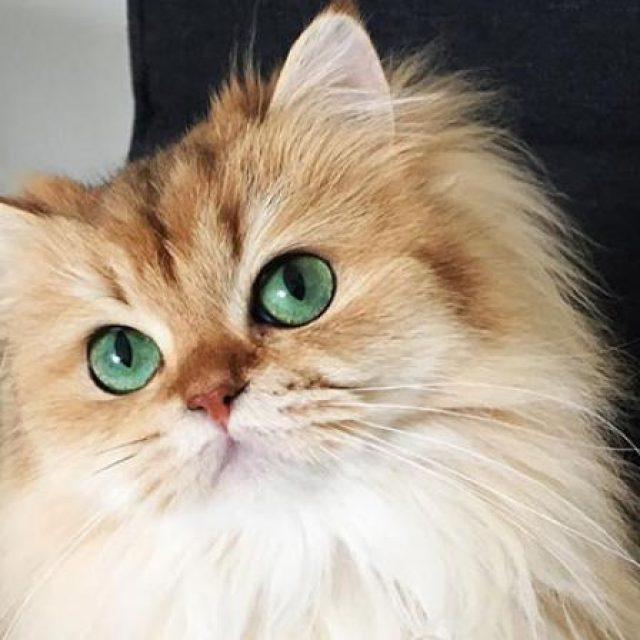 4 طرق في علاج تساقط شعر القطط المنزلية