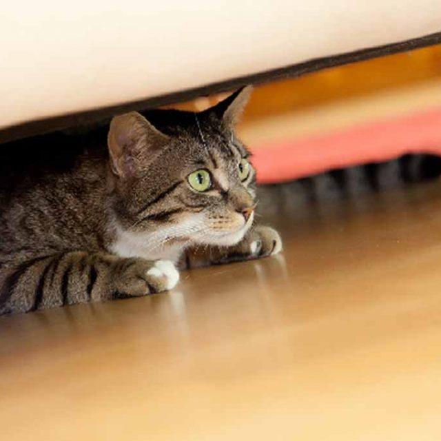 قطتي لا تحب ان المسها .. كيف تجعل القطة الصغيرة تعتاد الأشخاص الجدد