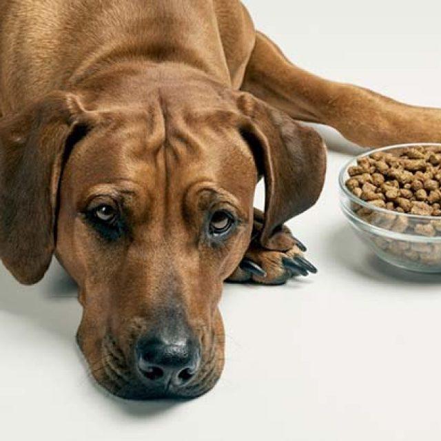 كيفية تغيير العلامة التجارية لدراي فود الكلاب