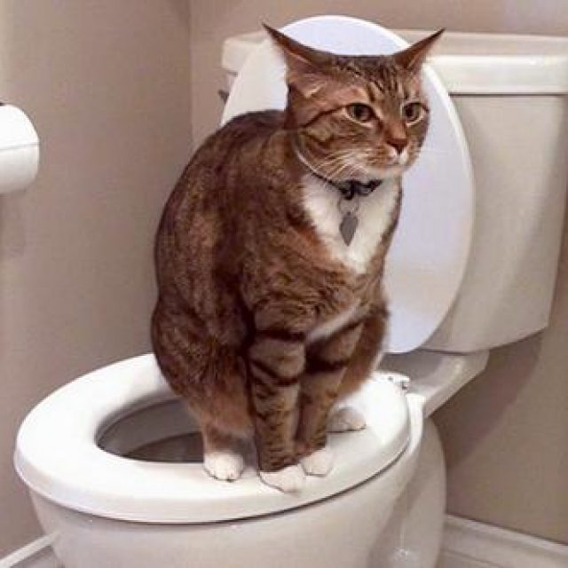 الإسهال في القطط من الألف إلى الياء