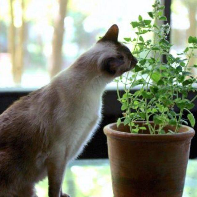 هل يمكن علاجالقططبالاعشاب ؟ 7 أعشاب تفيد في علاج أمراض القطط