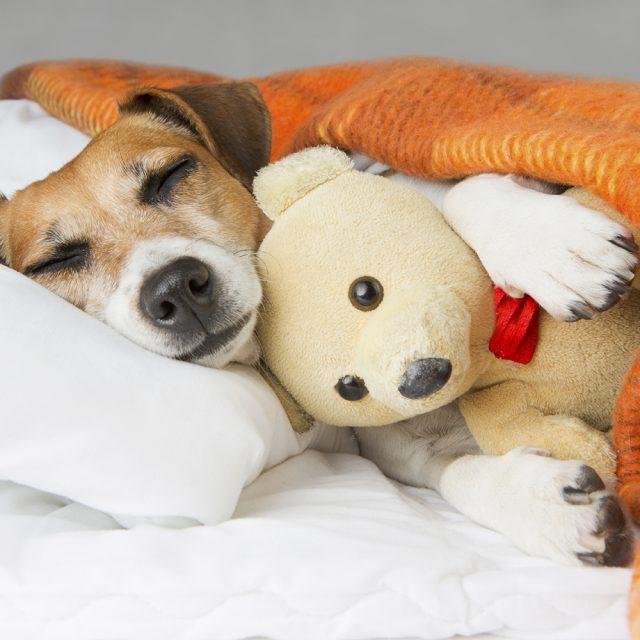 11 نصيحة للحفاظ على صحة الكلب قبل فصل الشتاء