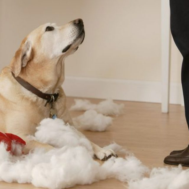4 تصرفات خاطئة وكيفية تعديلها في سلوك الكلاب