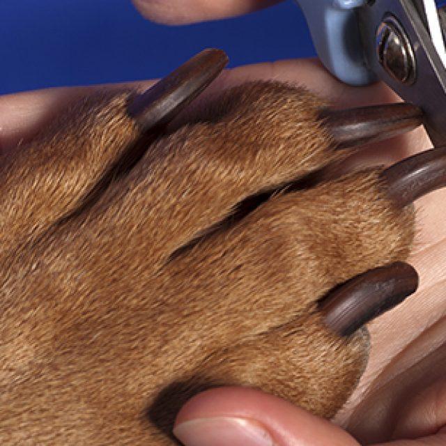 قص أظافر الكلاب بالصور بشكل احترافي
