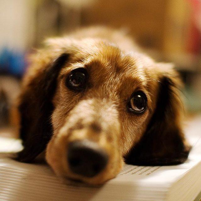مرض الإكزيما في الكلاب الأسباب و العلاج