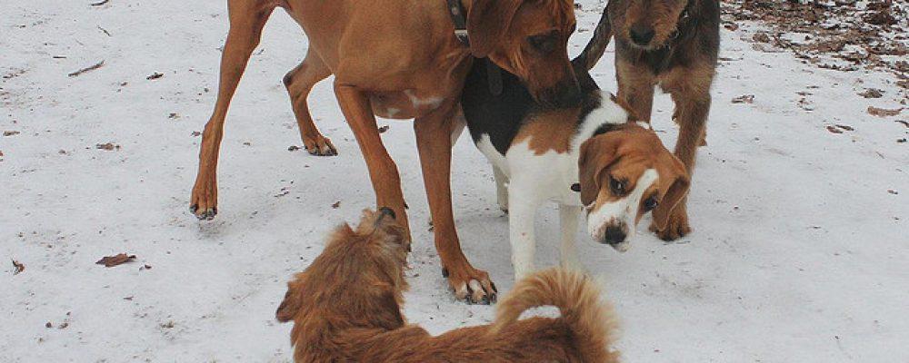 دليل شامل عن لغة الجسد في الكلاب بالصور