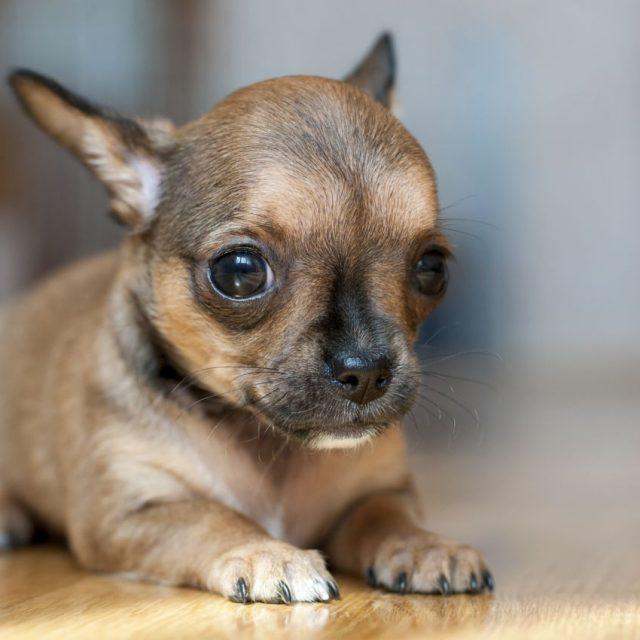 أسباب الرعشة عند الكلاب وعلاجها