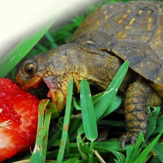 أمراض السلاحف البرية وطرق علاجها