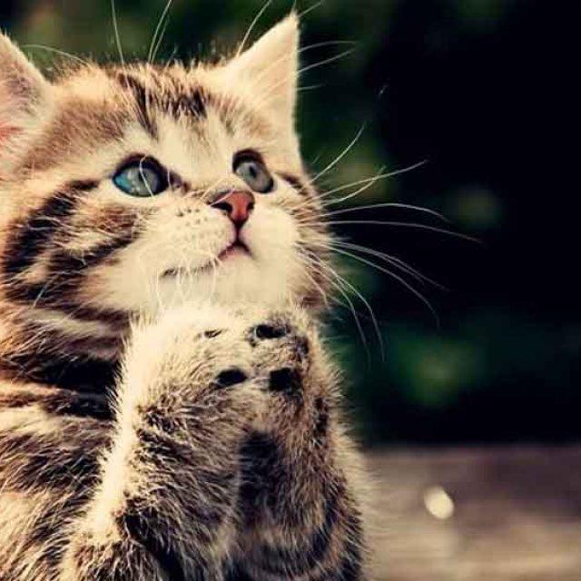 هل القطط تدعي على صاحبها ؟