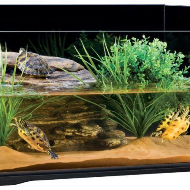 نصائح تربية السلاحف البرمائية في البيت