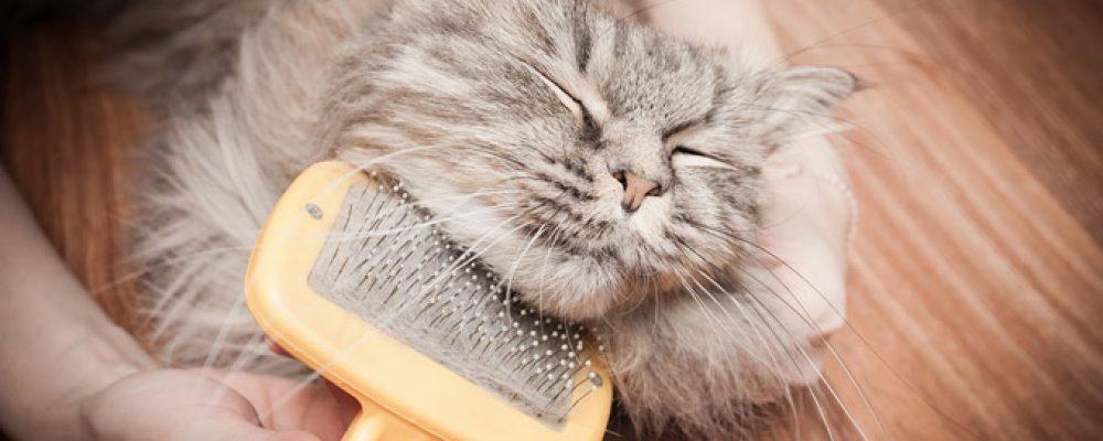 7 أسباب تؤدي إلى تساقط شعر القطط وعلاجها