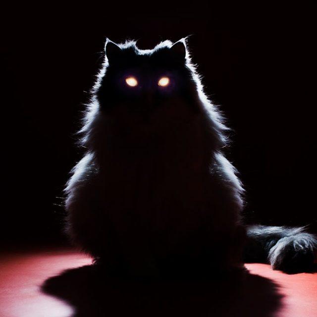 لماذا تلمع عيون القطط ليلا ؟