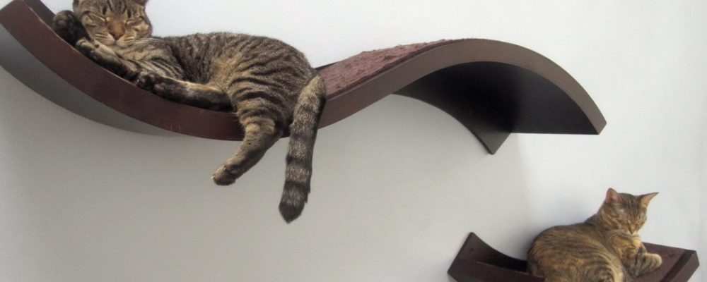 طريقة صنع رف الحائط لقطتك بالصور