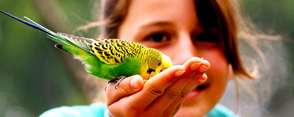 ماهي أنواع طيور الزينة وأشكالها