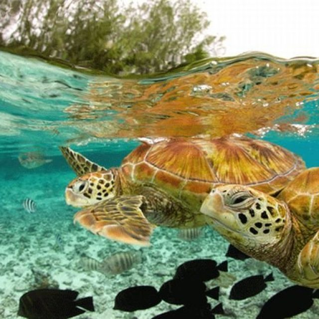 حياة السلاحف في الصيف بالتفصيل