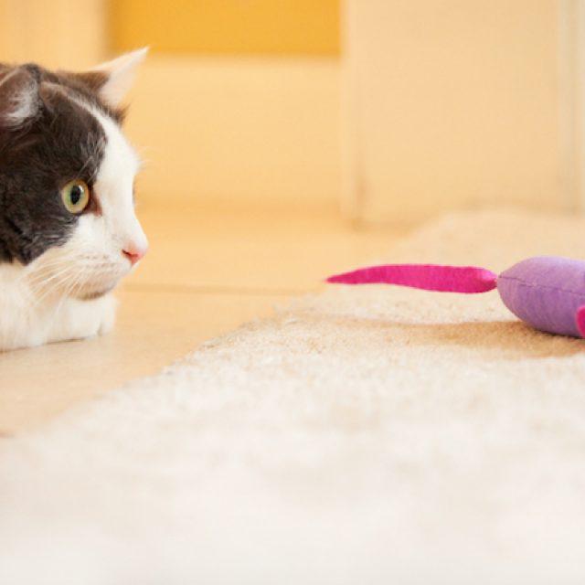 7 نصائح تساعد قطتك على الحياة لمدة أطول