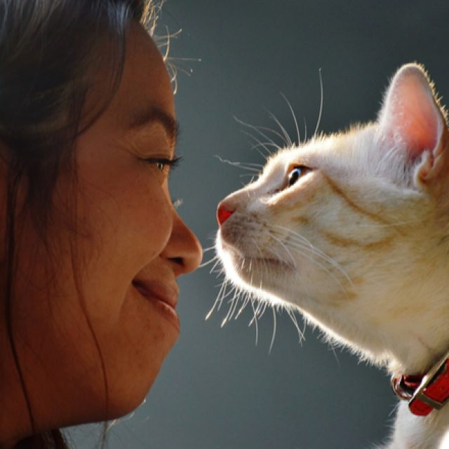 كيف أجعل قطتي سعيدة : علامات السعادة في القطط وكيفية تحقيقها