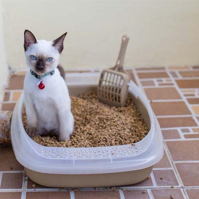 طرق التخلص من براز القطط بطريقة صديقة للبيئة