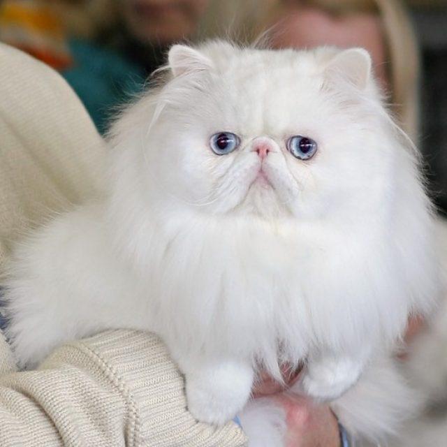 كيفية التعامل مع القطط الصمّاء (ملف كامل)